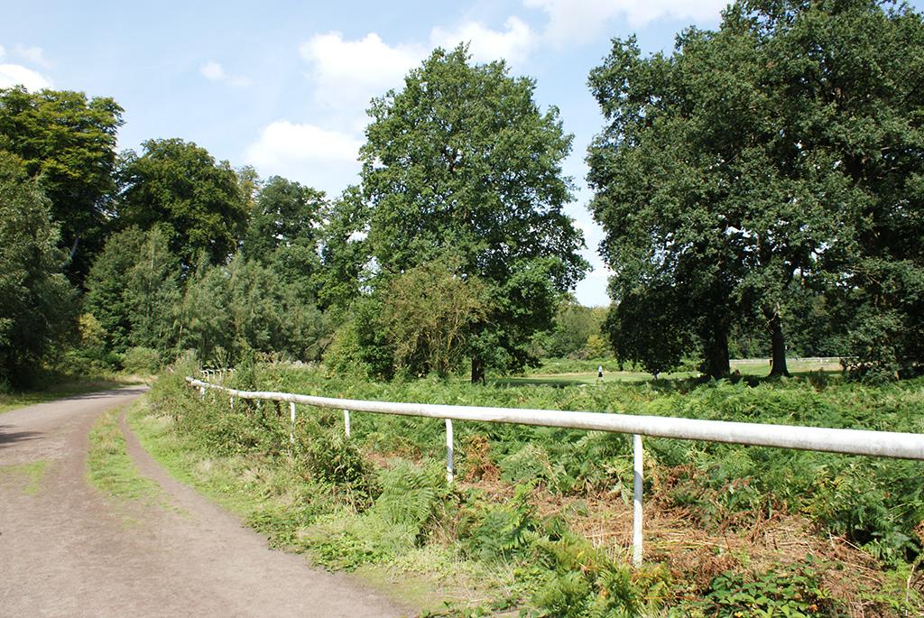 Sentier, prairie et arbres dans le domaine.
