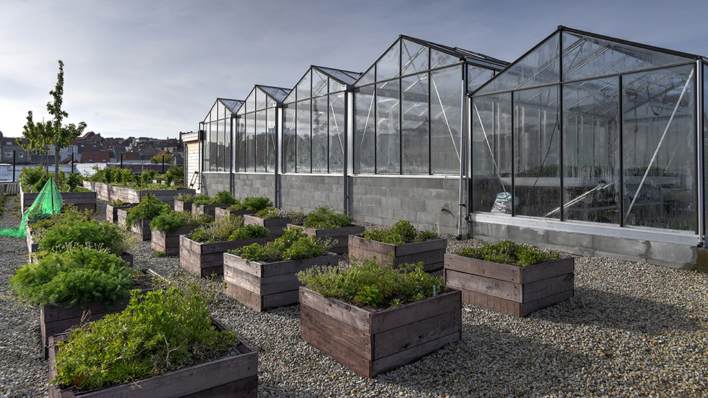 serres en plantenbakken op een dak
