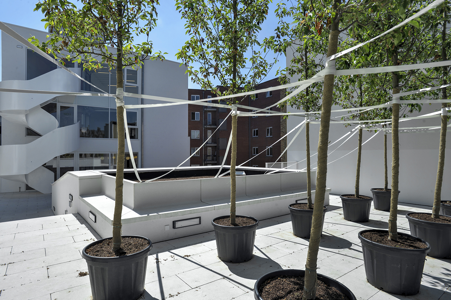 Terrace with small trees and a building in the background