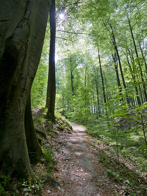 Sentier et arbres dans la forêt